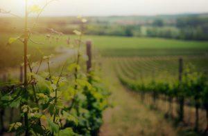Populaire Italiaanse wijnstreken feature image 01
